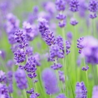 花粉症対策に! ハーブ・アロマでセルフケア