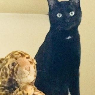 黒猫男子イケメンボーイ