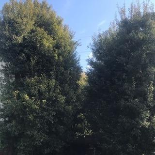 支障樹木伐採・特殊伐採