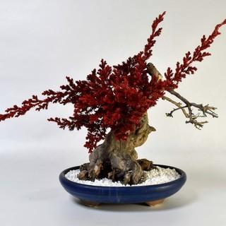 ドライ盆栽・手作り体験教室:中級・上級
