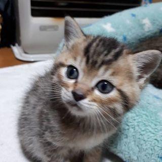 可愛い子猫ちゃんです♪