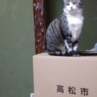 成猫親子。里親さん募集します。