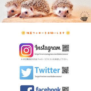 【無料】ハリネズミちゃんを抱っこして写真を撮ろう!