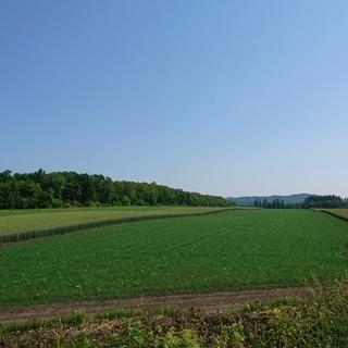 北海道で農業体験