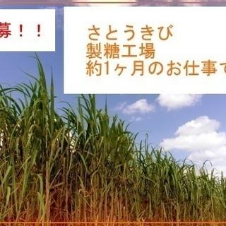 沖縄離島での製糖工場スタッフ