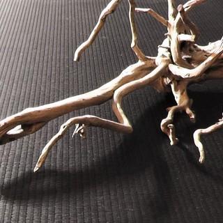 下北沢◆恐竜っぽい!?古い流木 H24くらい◆ディスプレイ.壁掛け...