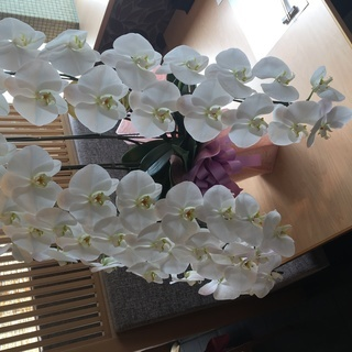 胡蝶蘭 コチョウラン 鉢植え 美品 贈り物 3本立て