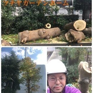 庭木の剪定・伐採 草取 草刈り 庭の手入れ店【所沢市 狭山市入間...