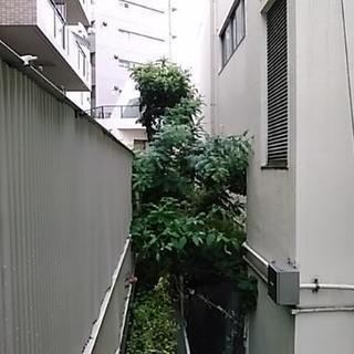 千葉・神奈川・東京23区にて、庭木の出張管理を致します