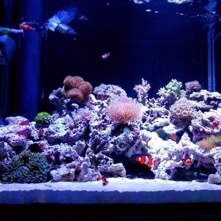 カクレクマノミ ニモ 5匹 熱帯魚 海水魚 水槽