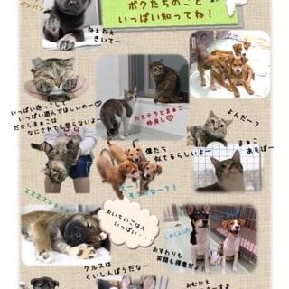 生後2カ月〜半年の子犬達♂♀10匹🐶家族を待っています🍀会いに来て...