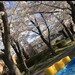 🌸🌸郡山で遊び隊🌸🌸開成山公園お花見🌸