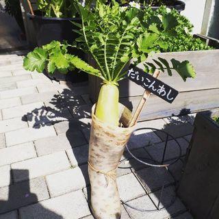 ビーガン、ベジタリアンの方で本当に安心安全な野菜を自分達で作りま...