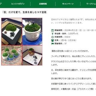 東急ハンズ新宿店で「苔」だけを愛で、生長を楽しむコケ盆栽ワークシ...