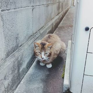 片目がない、二匹の猫助けて下さい。