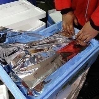 長浜の鮮魚市場での梱包作業
