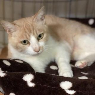 優しい色柄でプックリしたメス猫さん − 福岡県