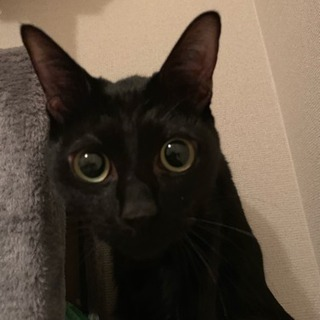 黒猫 くろすけ