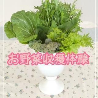 4月のお野菜収穫体験【よねベジ】