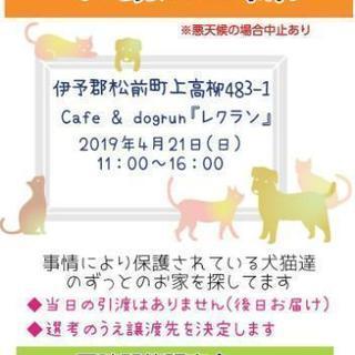 愛媛県より平成最後の保護犬猫譲渡会開催