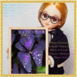 5球 紫の舞  オギザリス