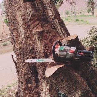 木の伐採承ります✂︎