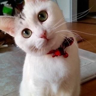 猫の飼い主募集!