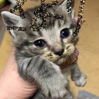 子猫ちゃん、新しいおうちが決まりました!