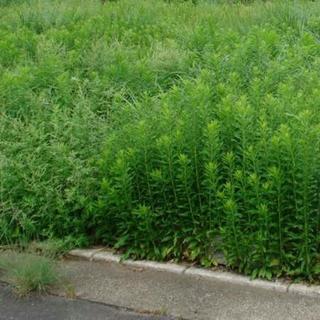 草刈り剪定、防草シート、抜根、倒木等致します