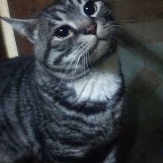 美男♂猫です!里親さん急募!