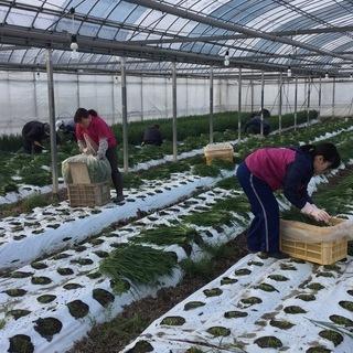 将来自営を目指す農業青年を募集します。