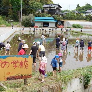 お米作り体験(田植え~稲刈り)参加者募集
