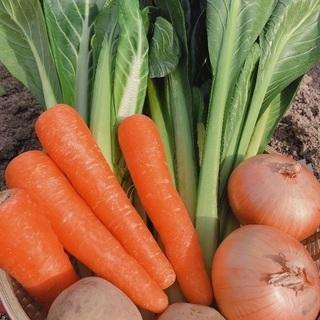 野菜の配送と検品作業のアルバイト募集