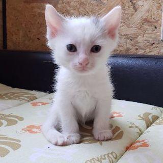 多頭飼い崩壊の猫さんが出産しました