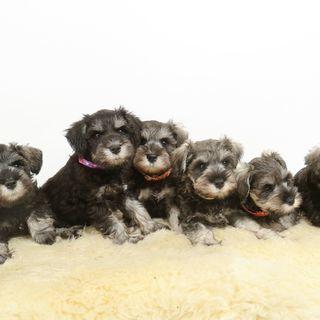 【8月までの短期】仔犬のお世話と掃除