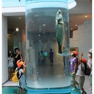 動物園 水族館 博物館 美術館 好き 募集
