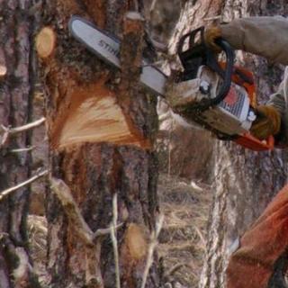 樹木伐採!台風で倒れた木(1本から)、庭木、山林、伐採致します!樹...