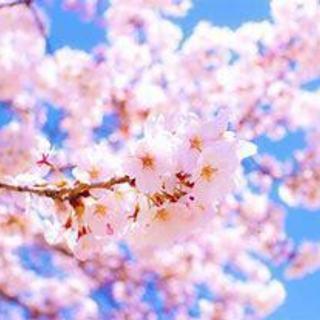 6月26,27,28日シータヒーリング®基礎セミナー【柏 松戸】