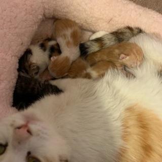 生まれたばかりの子猫の里親探してます(3匹まで)