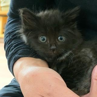 長毛の黒猫くん