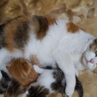 子猫(再募集)