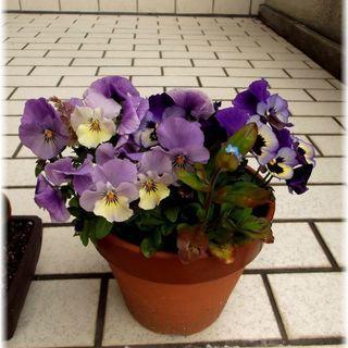 <<End of publication>>【植物寄せ植え】春の...