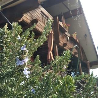 ハワイアンリボンレイ  ~荒川区・西日暮里のカフェで月1レッスン ~
