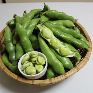 旬のそら豆で作る、「豆板醤作り教室」