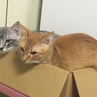 保護猫(生後10ヶ月くらい)