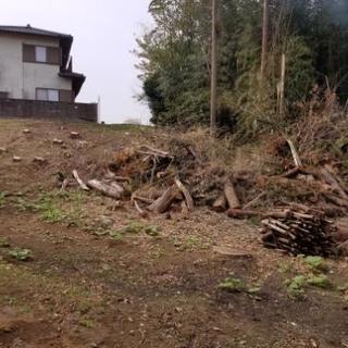 スギの木(伐採したやつ)加工して薪などに