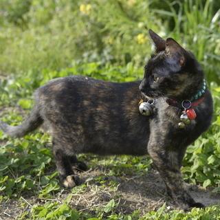 子猫約6ヶ月 さび 雌 野良猫の子供 飼い主不在を確認済み