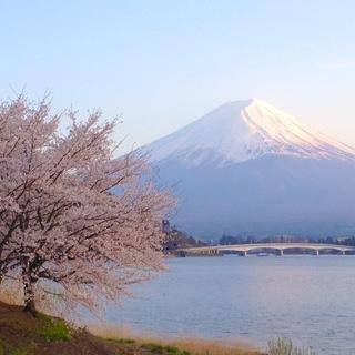 世界遺産 富士山と桜 写真 A4又は2L版 額付き