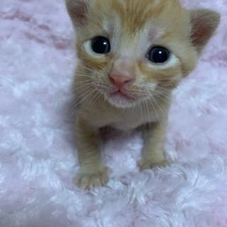 仔猫の里親さん決定しました!たくさんのお問い合わせありがとうござい...