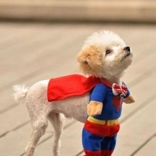 😆🌸犬好きさん、大大大歓迎っ🌸😊 動物好きから友だちつくり🐶🐶